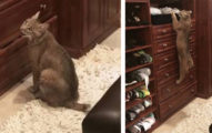 她路上拯救「胖貓」帶回家...卻驚見牠異常瘋狂!網友一看照片嚇壞:你沒事就已經很好