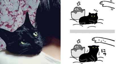 愛貓「自我意識」太強烈 主人只是想拿包包...「傲嬌喵反應」讓奴才秒融化!