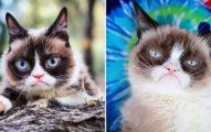 國際網紅「奧賭賭臭臉貓」去天堂旅遊了 200萬粉絲痛哭:告訴上帝你有多不爽QQ