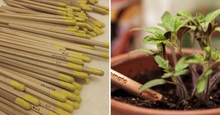 菲律賓推出「可以種植物」的環保鉛筆 寫完插到土裡「番茄、向日葵」就發芽!