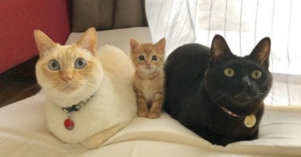 超溫馨「2+1貓咪全家福」大爆紅 主人得意:沒血緣關係!