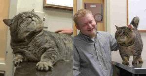 小貓走失找到「秘密狗食倉庫」幸福定居 管不住嘴「暴肥變成球」胖到主人認不出!