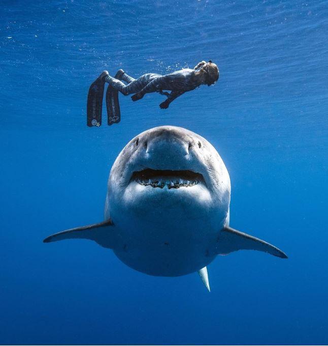 19張「讓心跳不小心漏一拍」的真實震撼照片 天空出現「飛翔中的巨大鯨魚」!