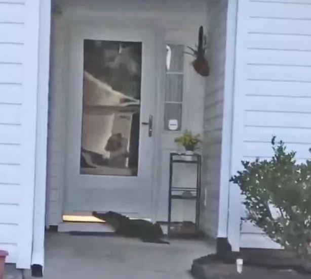 女屋主驚見家門口有「2公尺恐怖訪客」嚇壞 顫抖拍下全程:牠按了我家門鈴...