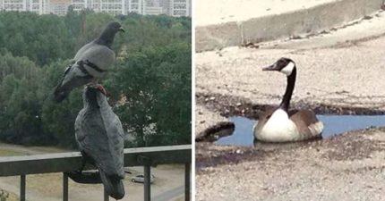 20張讓你秒從貓奴變「鳥奴」爆笑萌蠢鳥照 當彩色鳥愛上黑白鳥...生下的寶寶超美!