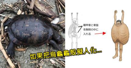 他畫「烏龜擬人圖」讓你一眼看出神奇構造 曝「龜殼=人類皮膚」輕摸就像襲胸