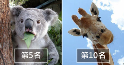 10種世界上「最骯髒的動物」排行榜 乳牛「24小時都在放屁」超驚人