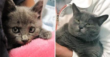 網友崩潰撿回家的流浪貓竟然變「崩壞大叔」 海量苦主狂點頭:變胖是基本...
