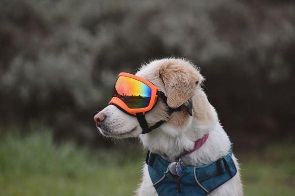 研究發現「養狗的人」更健康 日常運動量高出3倍…「超珍貴影響」對小孩更好!