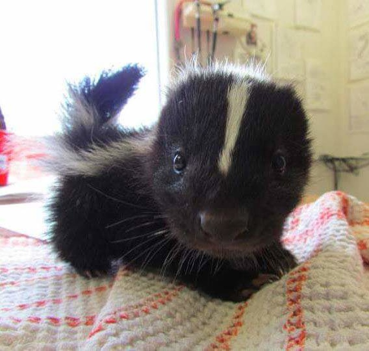 22張療癒程度爆表的「動物寶寶超萌照」 微笑的豬寶寶就跟女友一樣可愛!