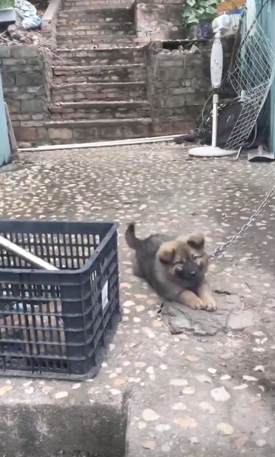 他看到外面寫著「内有狼犬」超緊張 下一秒「神展開劇情」直接噴笑:我超怕!