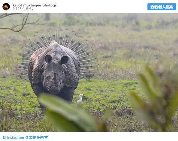 20張證明「大自然比漫威電影還精采」的精采照 有翅膀的熊真實存在!