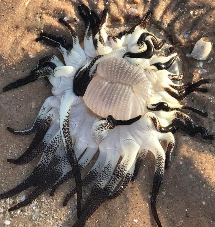 20個「比《復4》結局更讓人驚訝」的神秘物品 他在沙漠找到「自己會發光」的石頭!