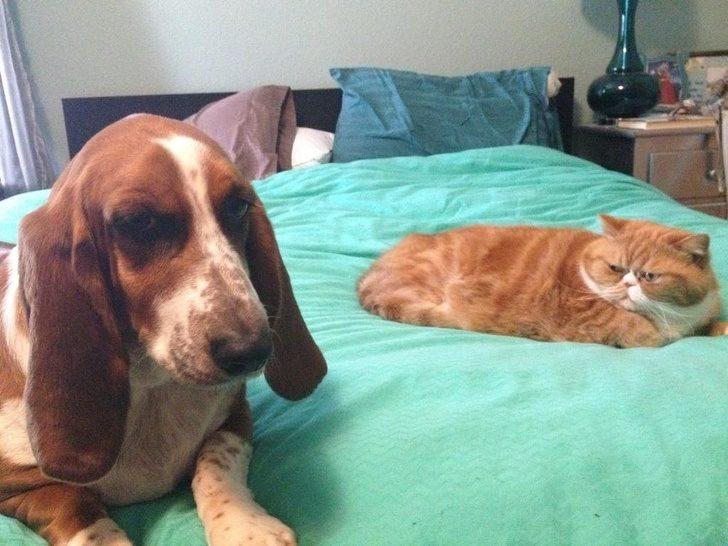 26張證明貓皇「絕不會給你好日子過」的爆笑統治照 看見「狗狗勾引主人」的表情真的夠派!