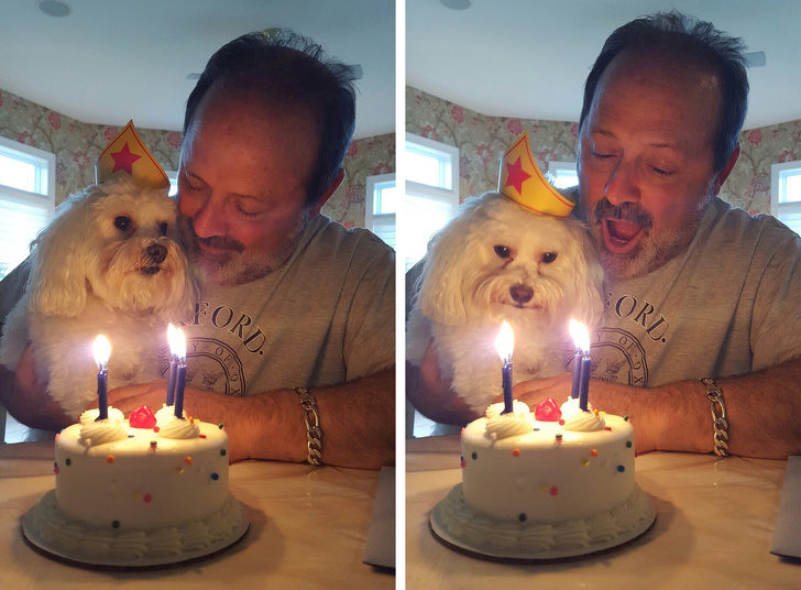 20個證明「主人把寵物當愛人來養」的日常 他每年都會寄生日卡片給「前女友的狗」