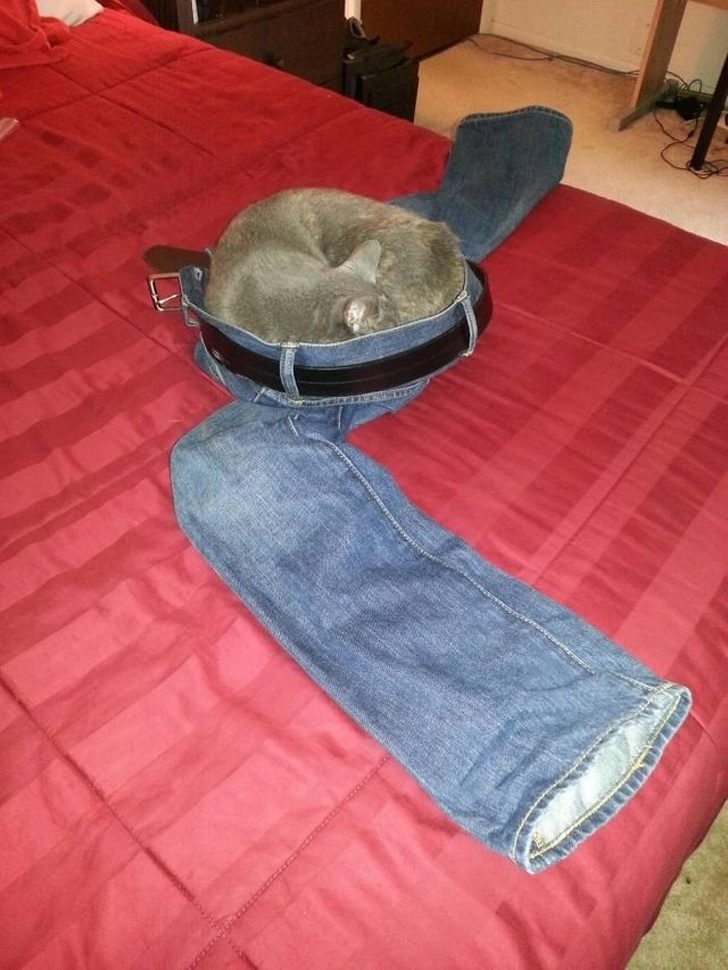 21個「讓主子永遠猜不透」的寵物驚喜日常 你家的貓皇竟然在騎馬!