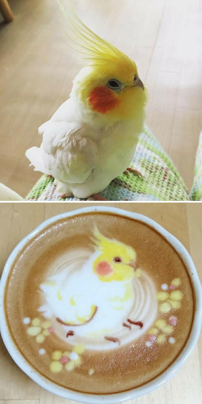 日本咖啡師超療癒「小鳥拉花」爆紅全網!網看「小鳥本尊」對比照驚呼:太像了❤
