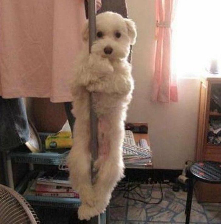 23張讓你「猜不透狗狗心思」的爆笑日常 汪星人「跳鋼管舞」可愛到暈了!