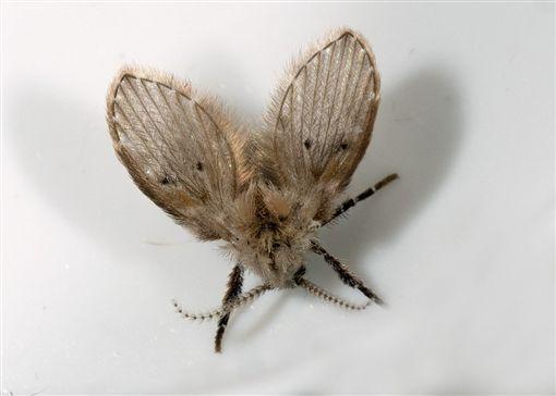 廁所見「神煩小飛蟲」千萬別用手打 一拍下去...空氣中「滿滿病菌」漂浮!