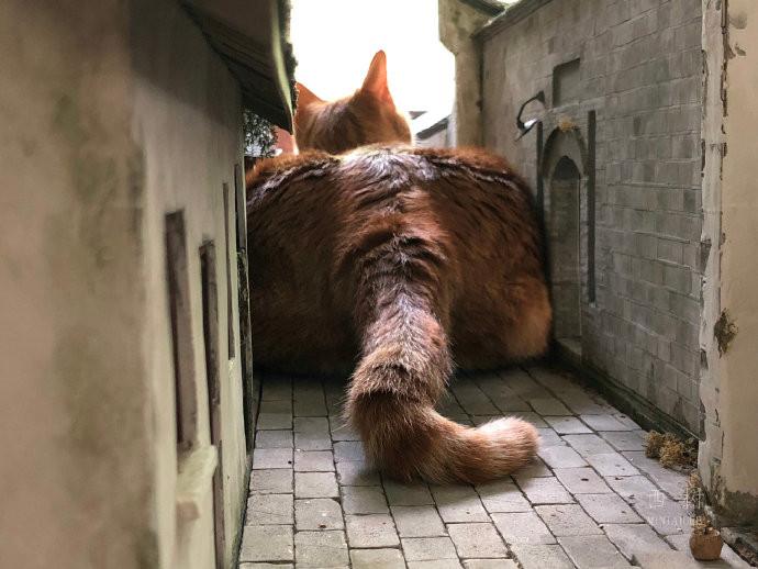 老村莊被「貓斯拉亂入」大屁直接塞滿街道 奴才崩潰:拜託溫柔點!