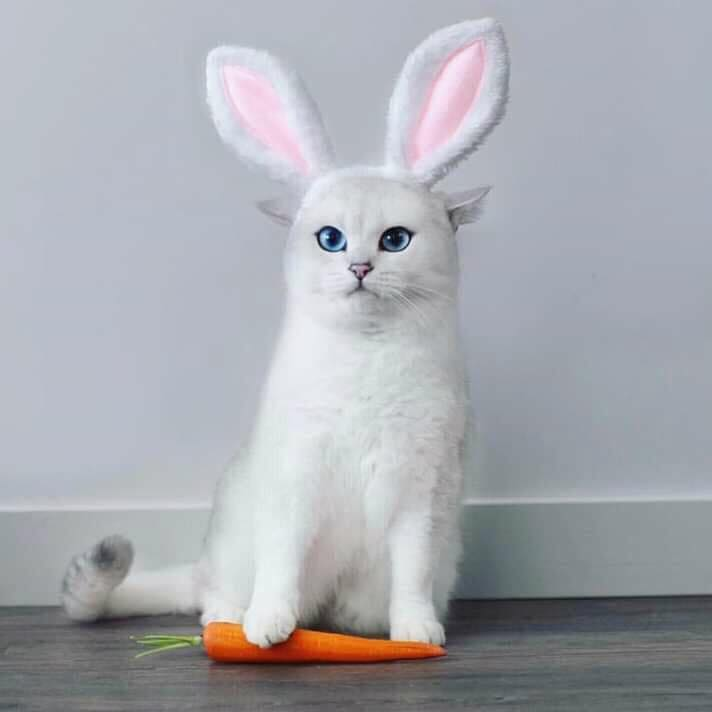 藝術家把「貓皇崩壞照」創作成插畫 「超有戲畫面」笑翻網友:永遠搞不懂牠們!