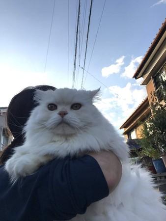 奴才曬厭世愛貓 抱起來「頭的尺寸超巨大」網友嚇呆:是獅子?