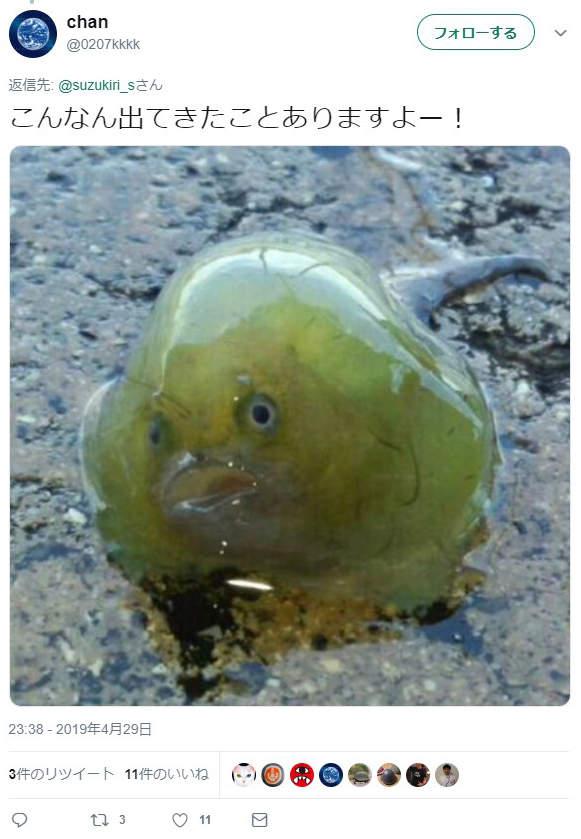他拍下鮪魚肚裡的「透明未知生物」求解 網看到「超萌外型」暴動:外太空來的?
