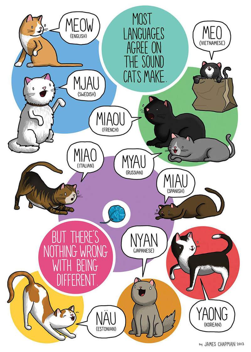 原來貓以前不會喵?日研究「喵喵叫」只有400年歷史 網看到「古代叫聲」震驚:好可愛