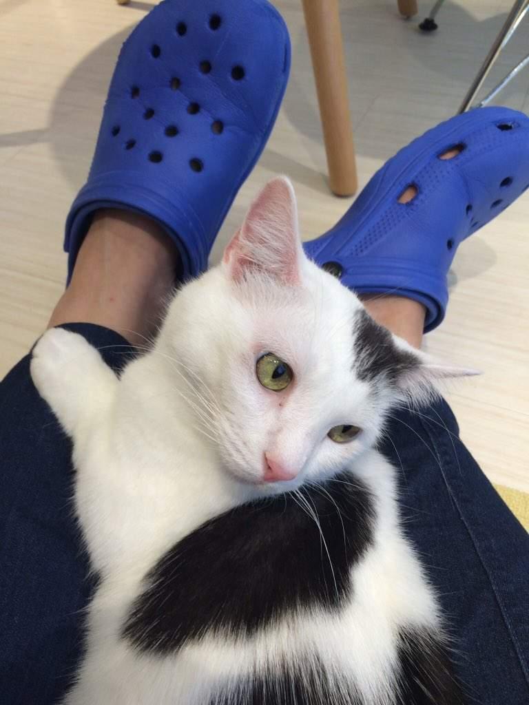 「牛仔褲」竟讓貓皇瘋狂?網實測「兩大品牌」喵星人反應hen異常:原來是真的!