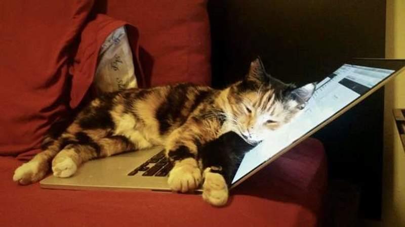 喵星人誤把主人「還沒寫完的檔案」寄出去 卻意外「收到300萬獎賞」貓奴樂翻!