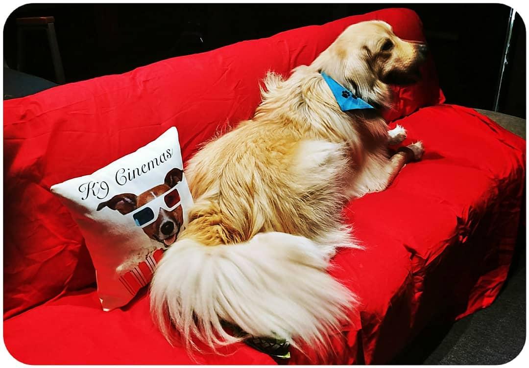 全球首創「寵物電影院」價格超佛 「狗狗友善設計」網推爆:牠們再也不孤單!