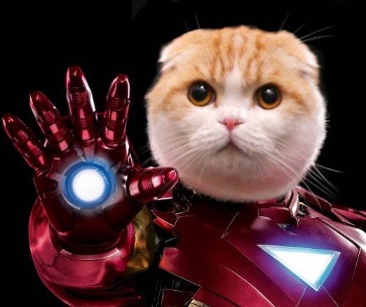 主人腦洞大開打造「貓皇cosplay秀」 網看到「雷神喵爾」狂讚:完全神複製!