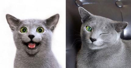 網瘋傳超上鏡「俄羅斯藍貓」 迷幻瞳孔「人類秒被馴服」網:根本是《貓的報恩》男爵!