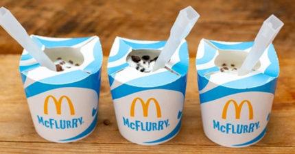 英麥當勞宣布全新「環保政策」 冰炫風「不給塑膠蓋」連沙拉也要換包裝!