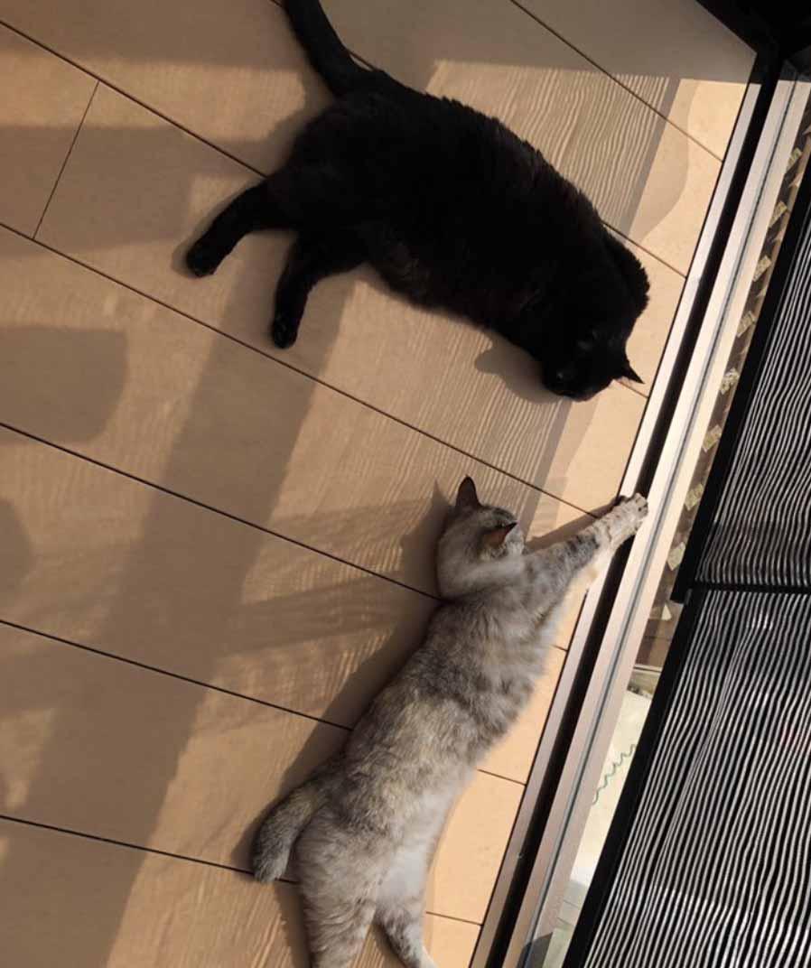 傲嬌貓「踩過奴才早餐」貓奴卻忍不住拍照紀念 超萌「肉球吐司」烤完更完美!