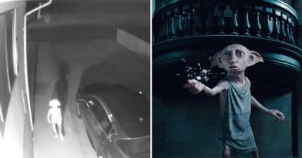 她在監視器發現「詭異身影」 放大看竟是《哈利波特》小精靈…網嚇瘋:多比自由了!