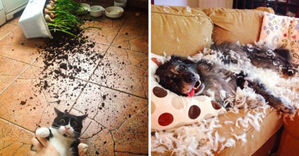 20隻「被主人當場抓包」的現行犯寵物 寵物訓練書被牠徹底消滅!