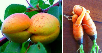 23個「外星人偷偷帶來地球」的超詭異蔬果 茄子長出「一張人臉」!