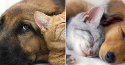 研究發現「聞寵物的味道」可以抗癌 特殊「長壽成分」最好每天吸一次!