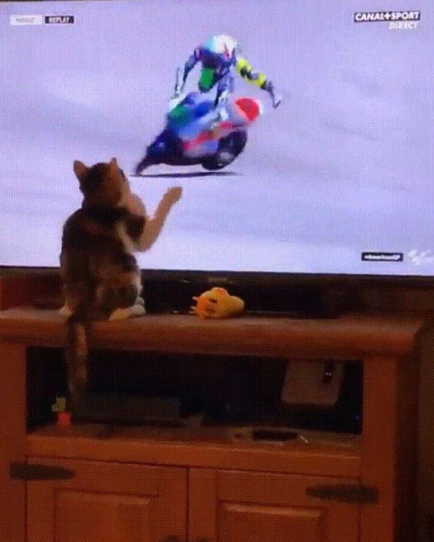 18張「上帝一定別有用意」的巧合照 貓皇靠「一個動作」證明超能力