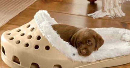讓狗狗「在拖鞋裡睡覺」的超萌床墊 網讚嘆:終於可以放過我的鞋!