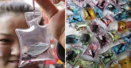 中國流行賤價販賣「活體動物鑰匙圈」!看小生命「慢慢流逝」...再直接丟垃圾桶