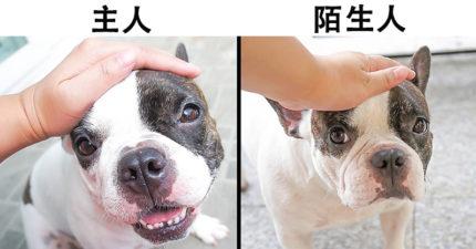 10種主人「最常讓狗狗心情差」的粗心舉動 「忘記餵飯」會讓愛犬變自卑!