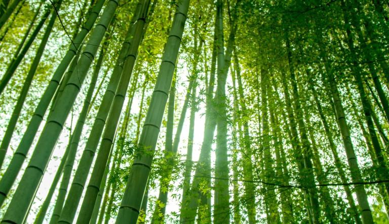 日本連鎖餐飲改用「竹子吸管」幾個月就完全分解 更大環境問題也同時被解決!