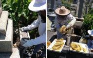 住持發現「大群蜂蜜」從祖墳不停飛出 打開驚見「海量蜂巢」...忍不住嚐一口:好吃!
