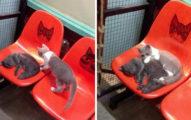 18個「能融化你內心」的睡覺貓咪照 喵星人「化身蝙蝠」一邊倒立一邊睡!