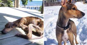 遊客到荒島上釣魚「反而帶回瘦皮狗」 他在回國前「決定做好事」改變狗狗一生!