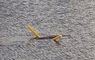 河面驚現「鱷魚騎浮力棒」游泳 超狂畫面瘋傳:牠也懂享受!