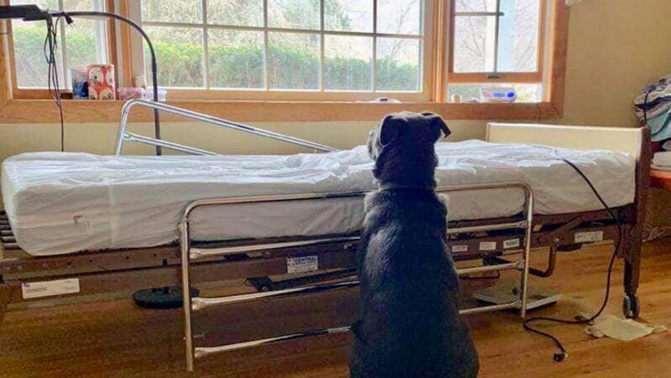 忠犬緊守「沒有人的病床」7天 不進食「靠聞味道活下去」護士鼻酸:他永遠回不來了