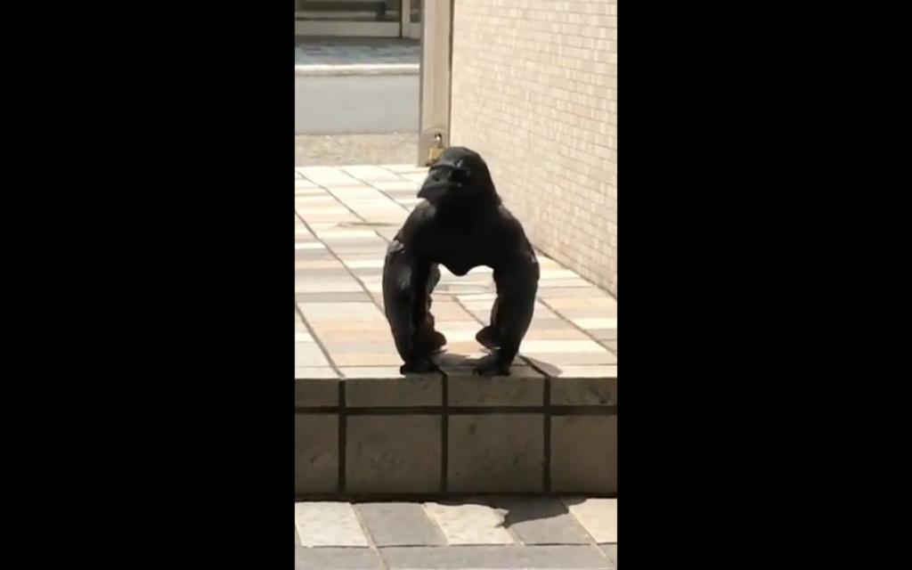 他路邊驚見「黑猩猩烏鴉」畫面超衝擊 網友看到「黑肌肉拱起」直接開始P圖大戰!